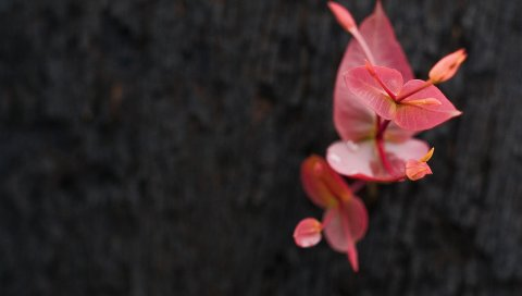 Растения, листья, фон, размытие