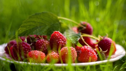 Малина, блюдце, ягода, трава