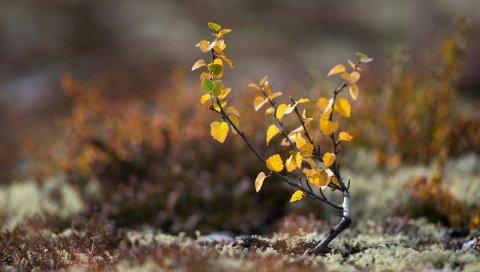 Растение, ростка, мох