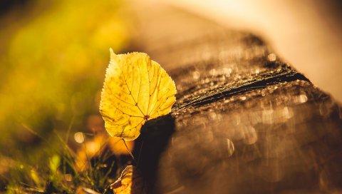 Лист, осень, блики, светлые, сухие
