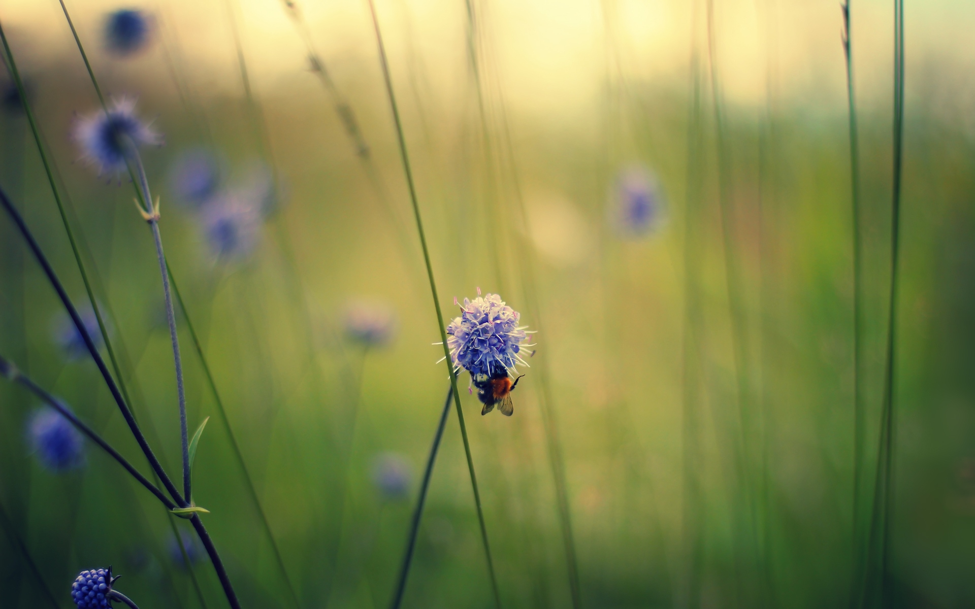 Картинки Макро, цветы, поле, пчела, стебли фото и обои на рабочий стол