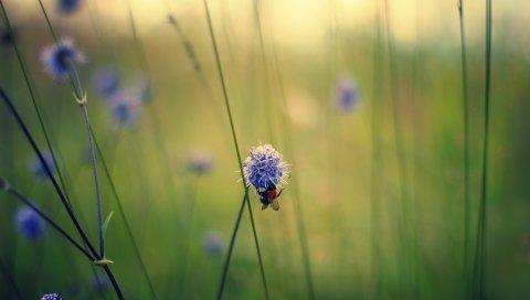 Макро, цветы, поле, пчела, стебли