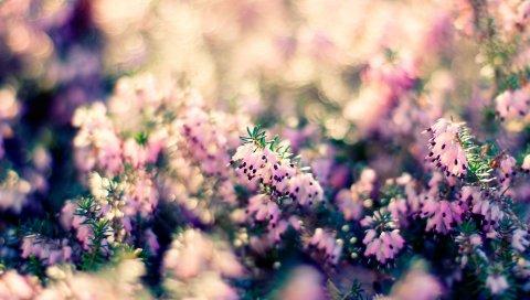 Травы, растения, цветы, размытие