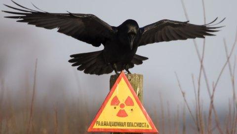 Табличка, ворона, предупреждение, опасность