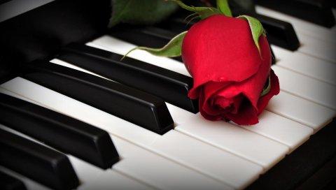 Роза, цветок, ключи, фортепиано