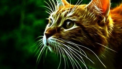 Кошка, лицо, глаза, настороженность