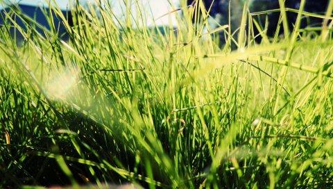 Трава, солнечный свет, яркий