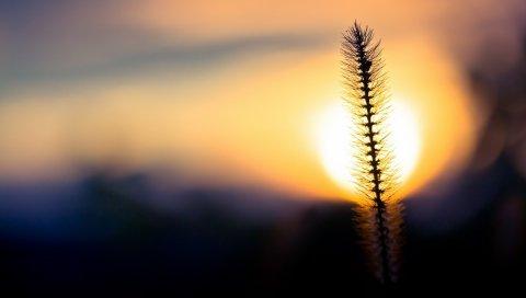Трава, закат, небо, круг