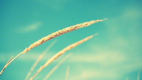 Крупным планом, трава, против неба
