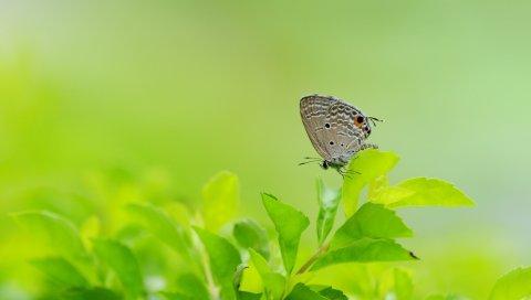 Бабочка, листья, трава, крылья, серый