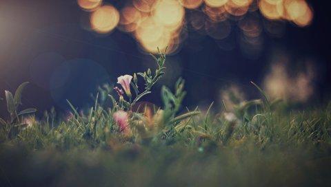 Трава, поле, боке, размытие, свет