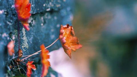 Листья, стены, сухие