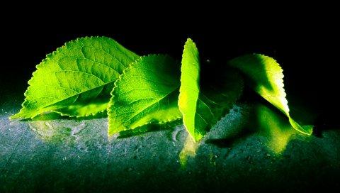 Листья, тень, форма, резные