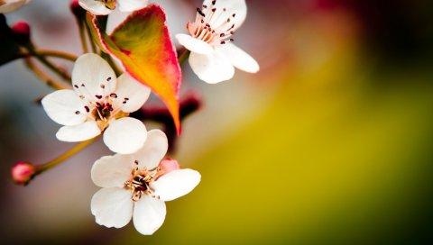 цветок, цветение,