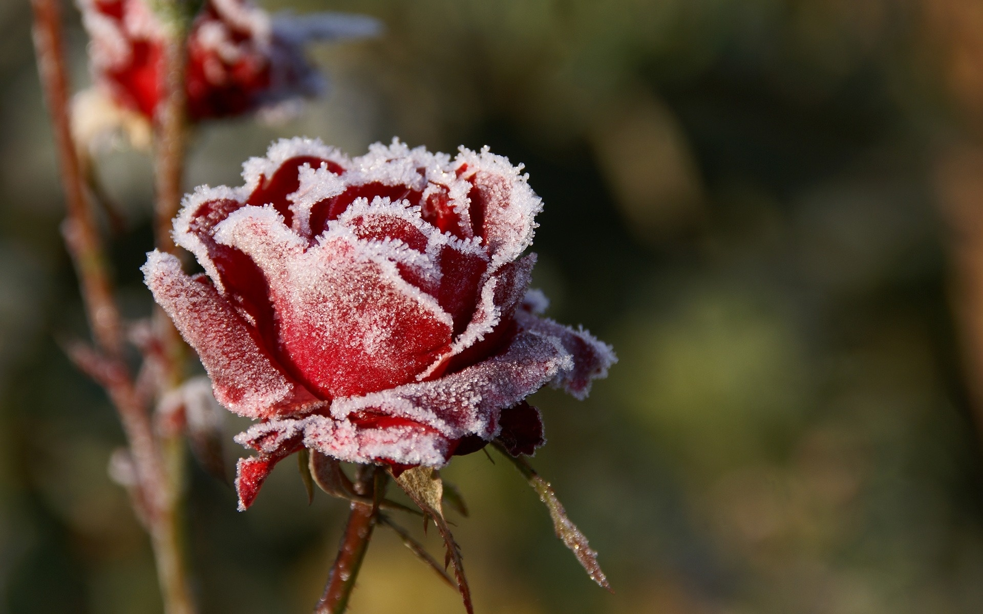 Цветы на снегу картинки с подписями, картинки гуляем маленькие