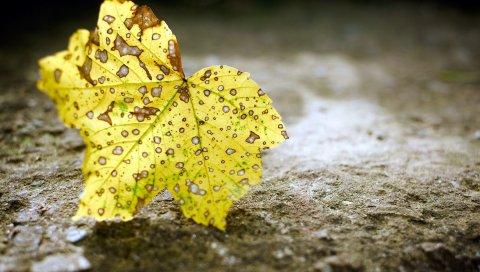 Лист, осень, пятно