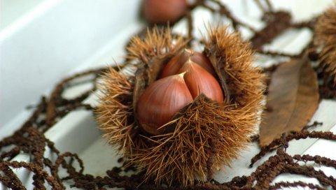 Каштаны, грецкие орехи, осень, лакомства