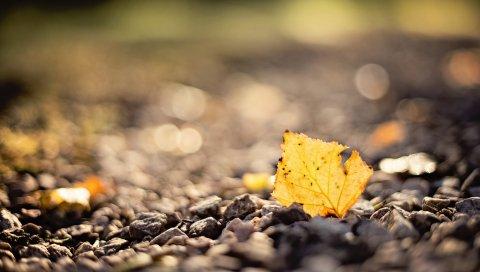 Лист, камни, осень, размытие
