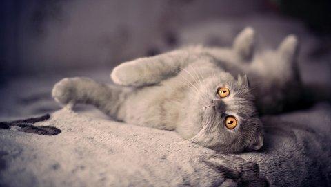 Котенок, кошка, вниз, игривый