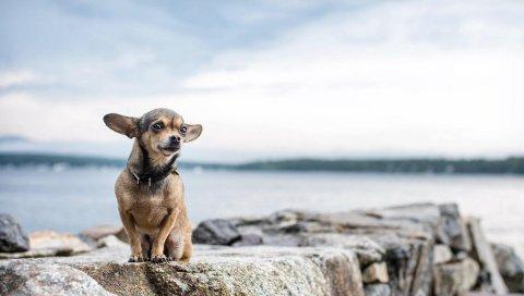Собаки, скалы, сидя, маленькие