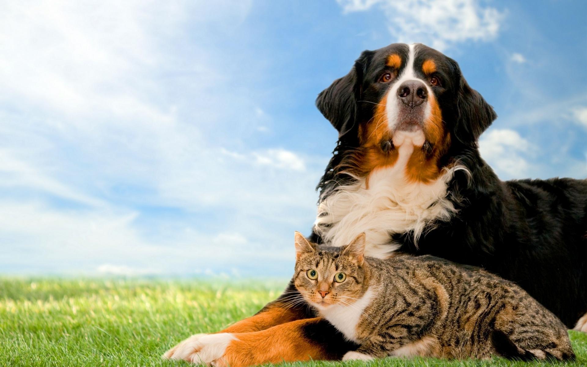 картинки на планшет собаки и кошки эффективность