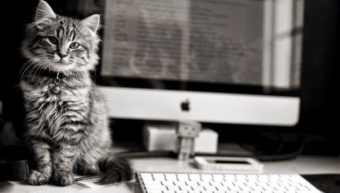 Котенок, пушистый, компьютер, стол