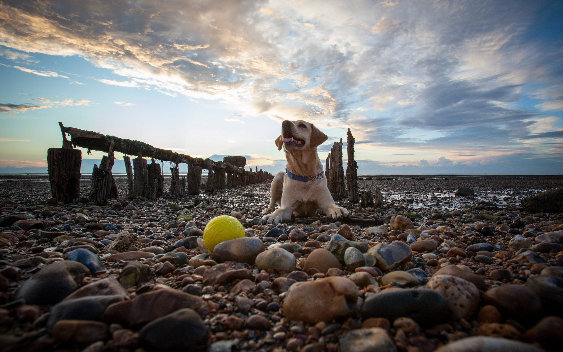 Картинки Собака, скалы, лежа, пляж, небо фото и обои на рабочий стол