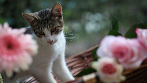 Кот, цветы, игривый, скалолазание