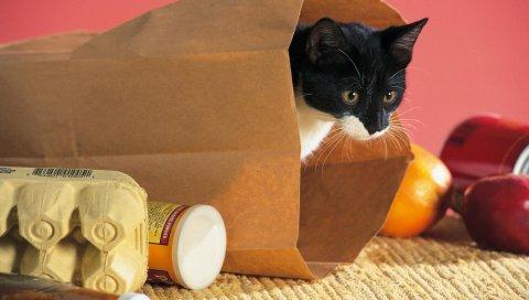 Кошка, упаковка, еда, скалолазание, любопытство