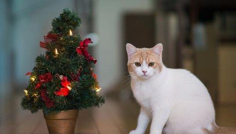 Кот, дерево, новый год, дом