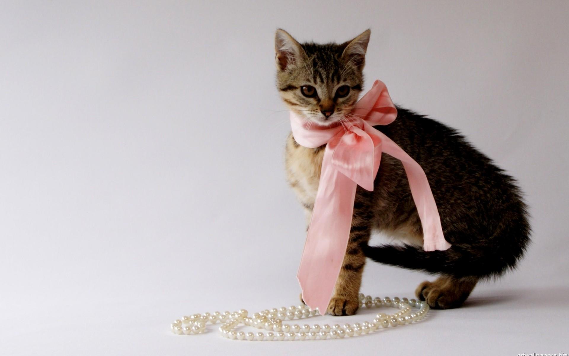 картинки на рабочий стол гламурные кошки местных