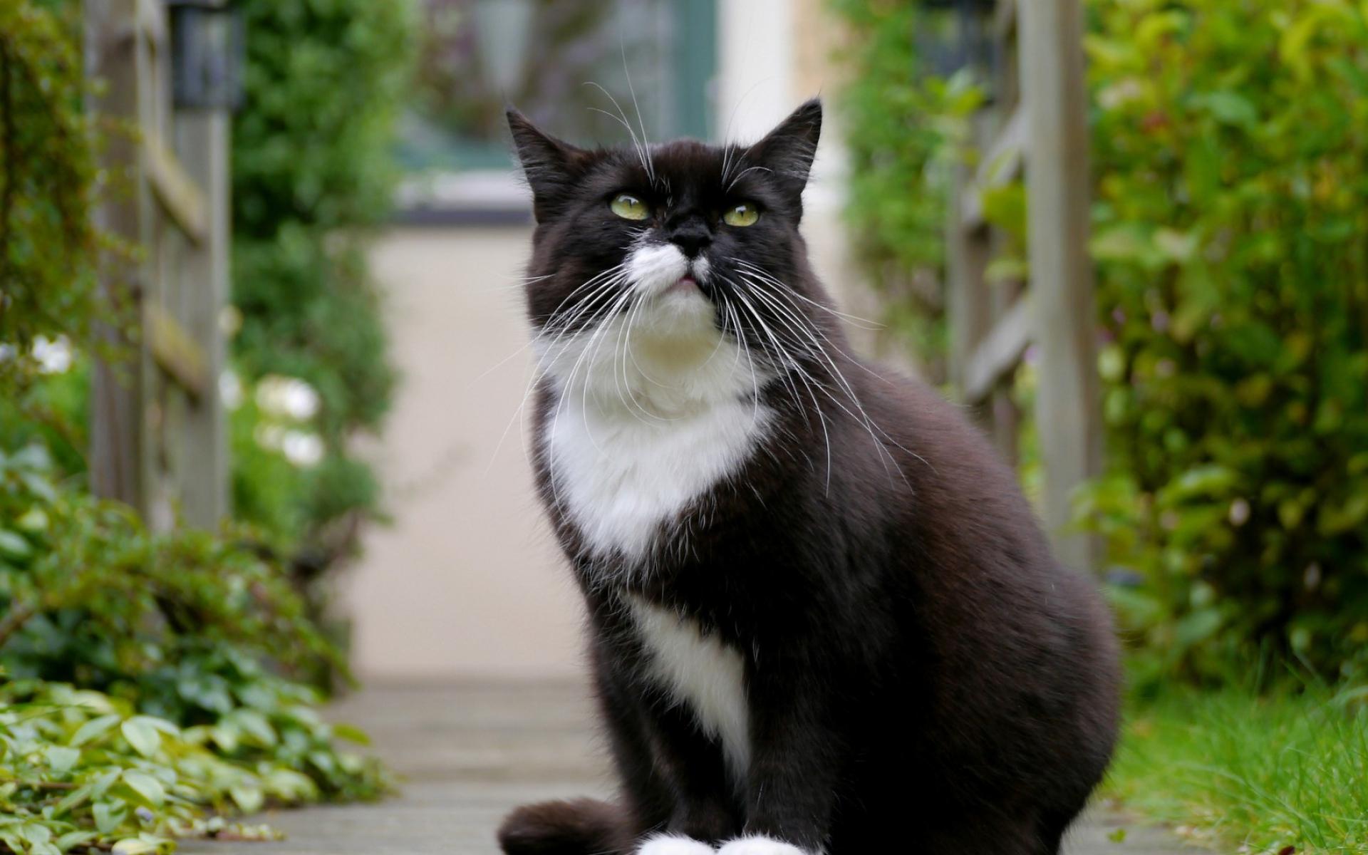 Картинки Кошка, лицо, глаза, толстые фото и обои на рабочий стол