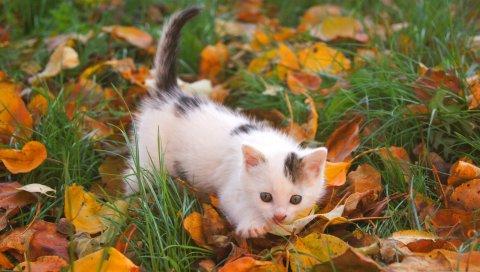 Котенок, ребенок, пятнистый, листья, осень
