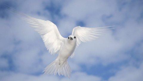 Птица, полет, небо, качели