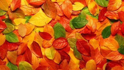 Листья, апельсин, осень, поверхность