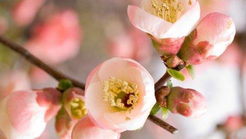 Цветы, ветки, цветы, лепестки