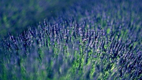 растение, трава, поверхность