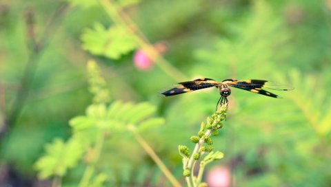 растения, цветок, размытость, бабочка