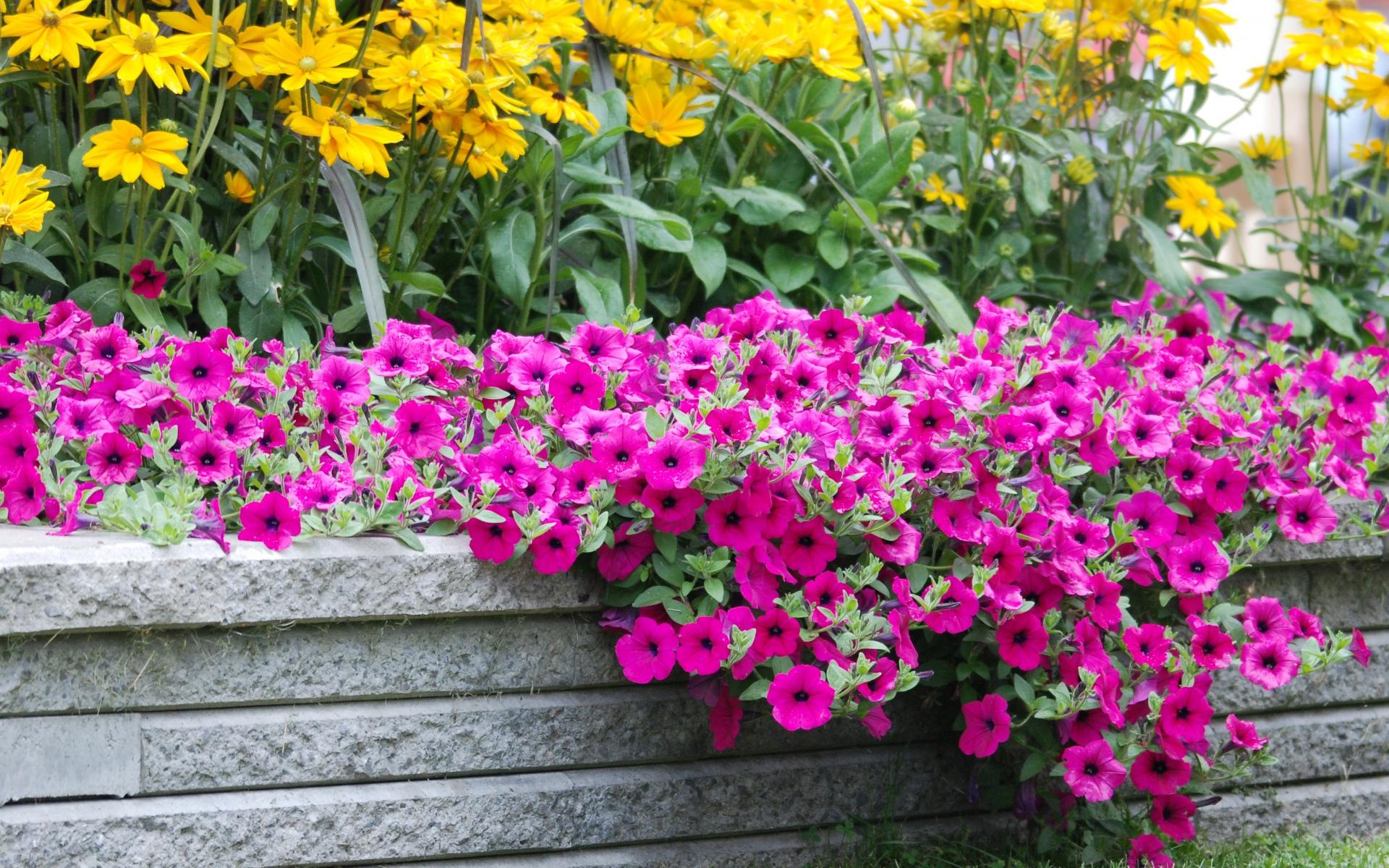 Картинки цветы, трава, газон, красивый фото и обои на рабочий стол