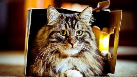 кошки, коробка, ложь, пушистые