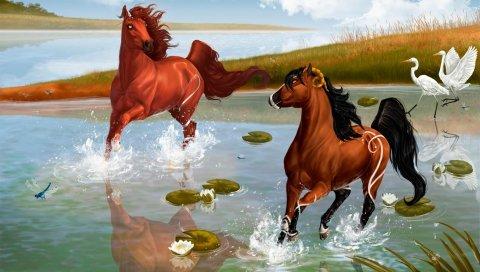 лошади, пара, игра, вода, брызги, пруд, цапли