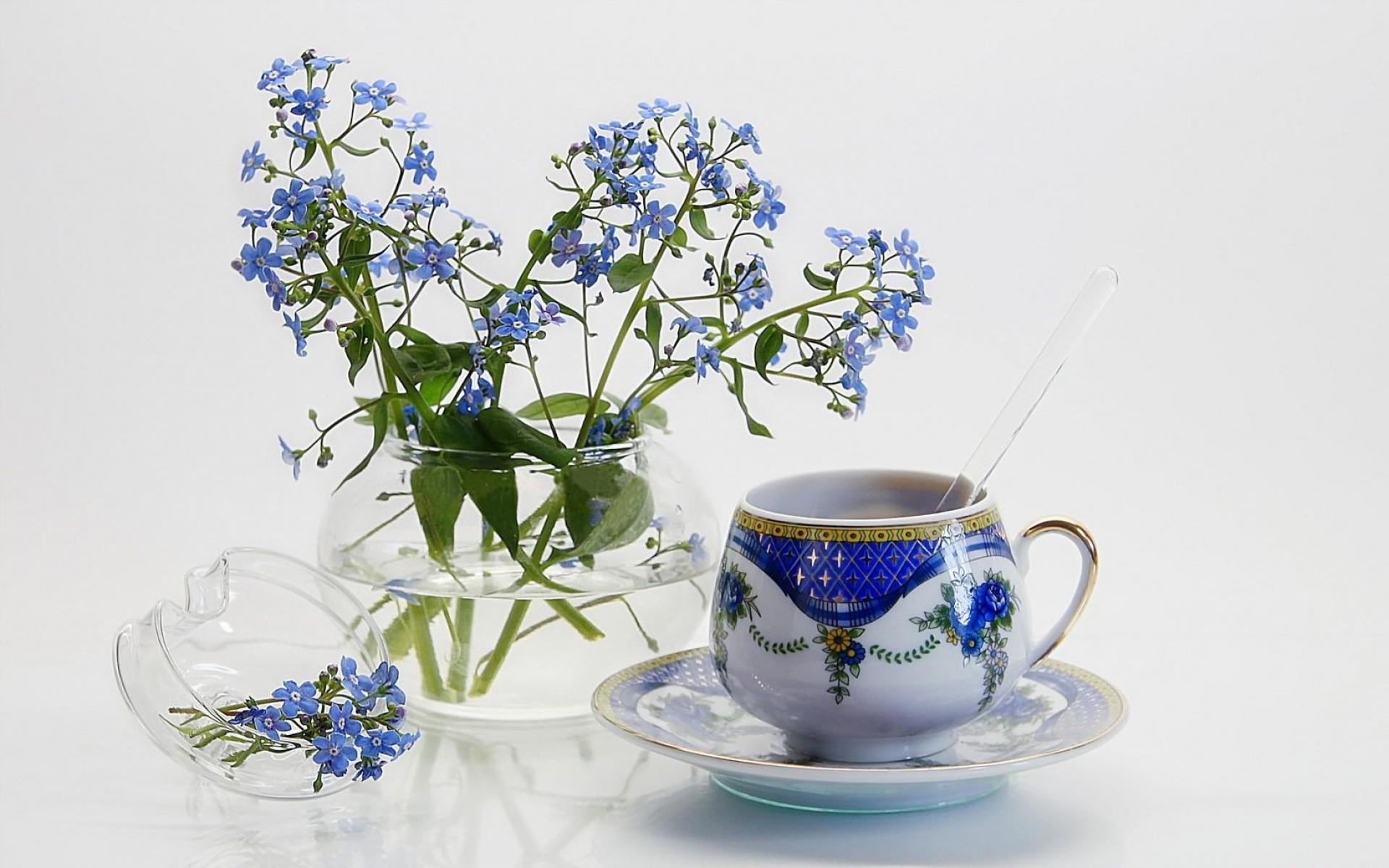 Картинки незабудки, цветы, маленькие, кувшин, чай пара фото и обои на рабочий стол