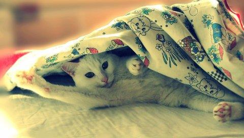 кошки, одеяла, ложь, свет