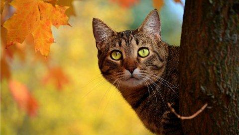кот, осень, дерево, скрыть