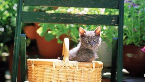 кошечка, магазины, сидя, кошка, цвет