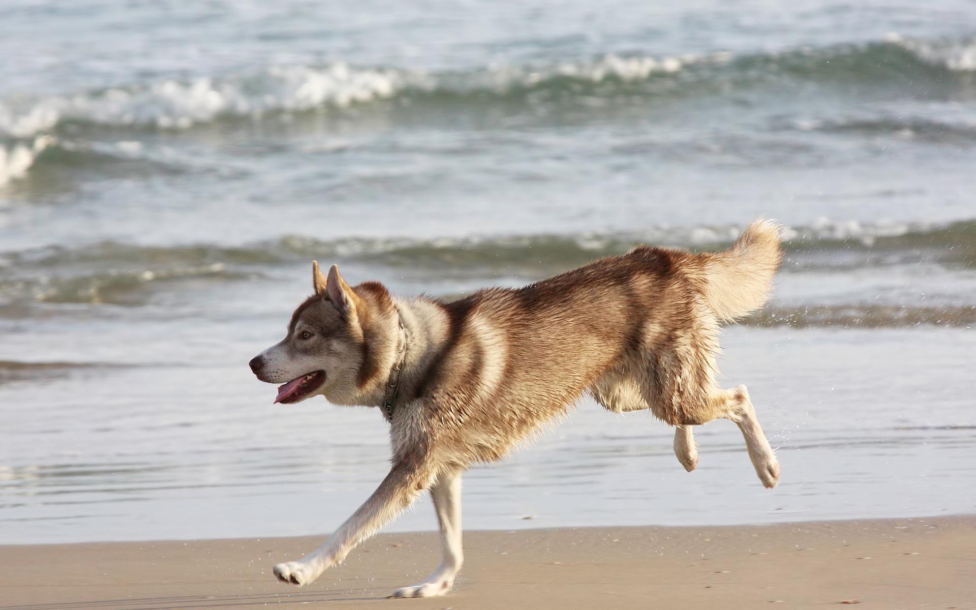 бодипейнтинг картинки собака бежит множество