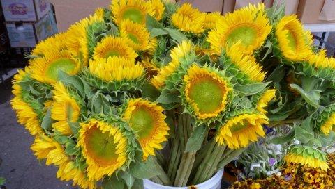 подсолнухи, букет, ведро, цветы