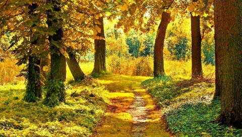 Трек, деревья, растительность, ранняя осень, сентябрь