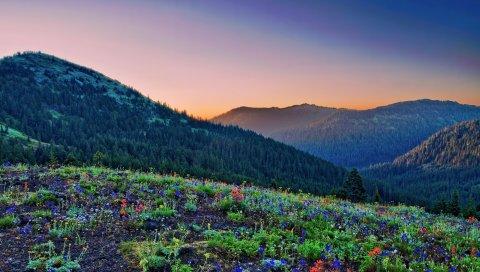 Трава, цветы, камни, горы, склоны, холмы, дерево, свет, оранжевый