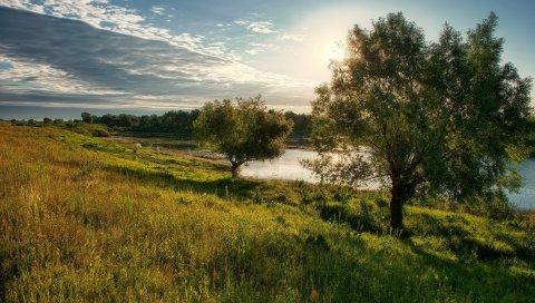Деревья, поляна, солнце, свет, облака, озеро, побережье, небо, тени, полдень